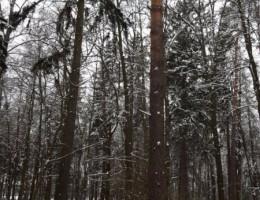 Вешаем совятник на дерево