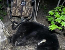 Медведь с лабаза-самолаза (тристенд) SCORPIO