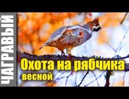 Embedded thumbnail for Охота на рябчика весной (гуманная)
