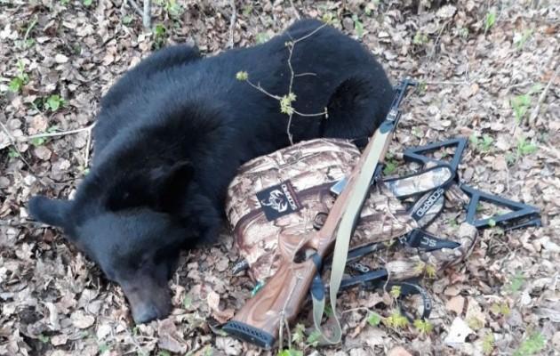 Медведь добыт с лабаза-самолаза SCORPIO
